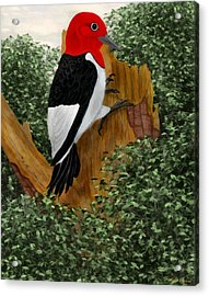 Acrylic Print featuring the painting Redhead Woodpecker by Walter Colvin