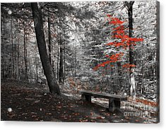 Reds In The Woods Acrylic Print by Aimelle