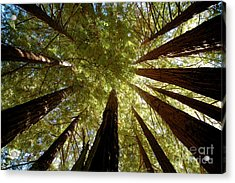Acrylic Print featuring the photograph Redwood Canopy by Johanne Peale