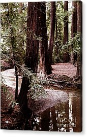 Redwood Stream Reflections Acrylic Print by Laura Iverson