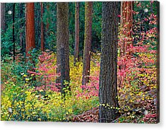 Redwoods And Dogwoods Acrylic Print by Tim Fleming