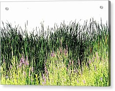 Reeds Lake Grass Acrylic Print by Suzanne Fenster