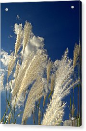 Reeds On A Sunny Day Acrylic Print