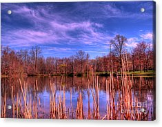 Reeds Acrylic Print by Paul Ward