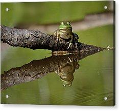 Reflecktafrog Acrylic Print