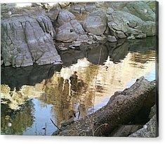 Reflect Acrylic Print by Lisa Wells