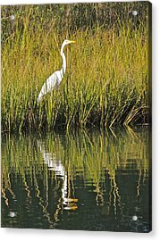 Reflecting Acrylic Print by Eve Spring