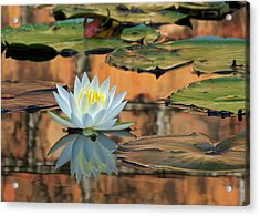 Acrylic Print featuring the photograph Reflecting Pond by Deborah Smith