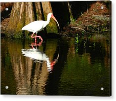 Reflection Acrylic Print by Don L Williams