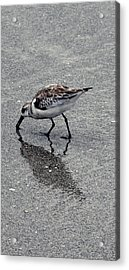 Reflection Of A Lonely Bird Acrylic Print