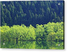 Reflection Of Forest On Water Acrylic Print by Imagewerks