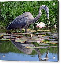 Reflections At Lilly Pond Acrylic Print