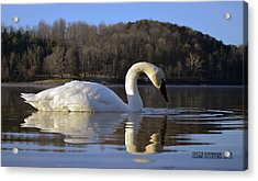Acrylic Print featuring the photograph Reflections by Brian Stevens