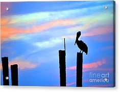 Acrylic Print featuring the photograph Reflections In Water With Pelican by Dan Friend