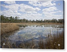 Reflections Acrylic Print by Lynn Palmer