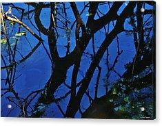 Reflections Acrylic Print by Vinod Nair