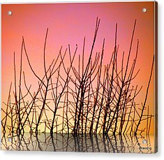 Reflects In Nature Acrylic Print by Michael Canning