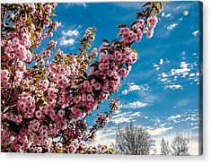 Refreshing Acrylic Print by Robert Bales