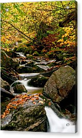 Refreshing Thought Acrylic Print by Aron Kearney