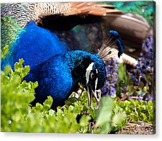 Regal Colors Acrylic Print by Christy Woods