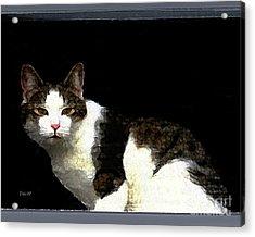 Reggie In Window Acrylic Print