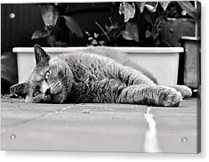 Relax Acrylic Print by Laura Melis