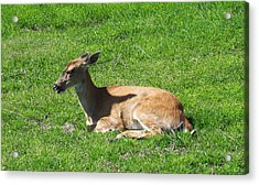 Relaxin Acrylic Print by Aimee L Maher Photography and Art Visit ALMGallerydotcom