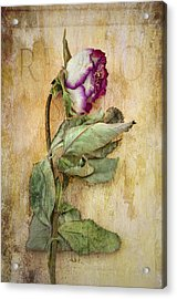 Remembrance Acrylic Print by Marion Galt