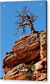 Remnants Of A Struggle Acrylic Print by Christopher Holmes