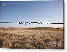 Repaired Strand Of Barbed Wire Acrylic Print by Jetta Productions, Inc