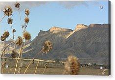 Reprieve From Desert Sun Acrylic Print