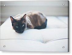 Resting Cat Acrylic Print