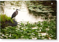 Acrylic Print featuring the photograph Resting My Wings by Anthony Rego
