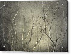 Reticent Acrylic Print