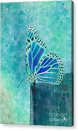 Reve De Papillon - S02a2 Acrylic Print by Variance Collections