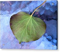 Reverse Ivy On Blue Acrylic Print by Beth Akerman
