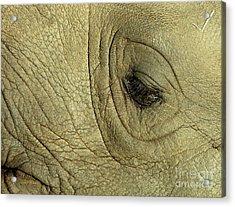 Rhino Eye Acrylic Print by Marc Bittan