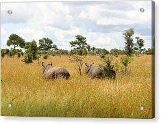 Rhino Pair Acrylic Print by Deborah Hall Barry