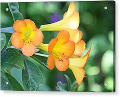 Rhododendron  Acrylic Print by Andrea  OConnell