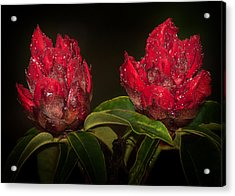 Rhododendron Acrylic Print by Svetlana Sewell