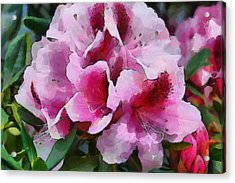 Rhododendrum Acrylic Print