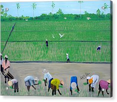 Rice Field Haiti 1980 Acrylic Print by Nicole Jean-Louis
