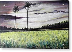 Rice Field  Acrylic Print by Usha Rai
