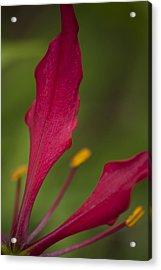 Rich Petals Acrylic Print