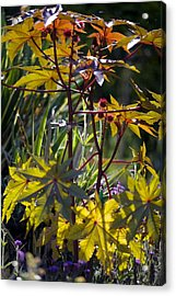 Ricinus Communis 'gibsonii' Acrylic Print by Dr Keith Wheeler