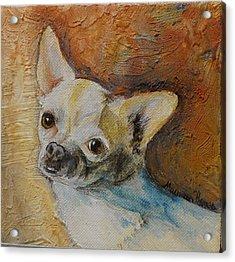 Rico Blue Chihuahua Acrylic Print