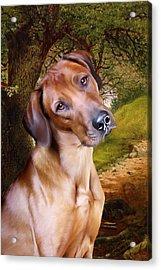 Ridgeback Woodland Acrylic Print by Julie L Hoddinott