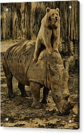 Riding Along- Rhino And Bear Acrylic Print by Lourry Legarde