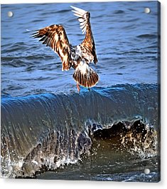 Riding The Wave  Acrylic Print by Debra  Miller