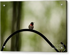 Right Here Waiting Acrylic Print by Venura Herath